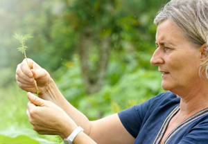 A photograph showing Dr Lucile Cornet-Vernet examining a small branch of Artemisia. Source: NaturaPassion