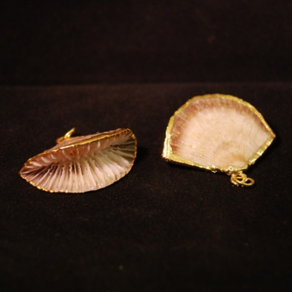 Pendant mushroom coral with gold around perimeter