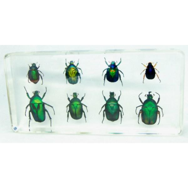 set of 8 green beetles
