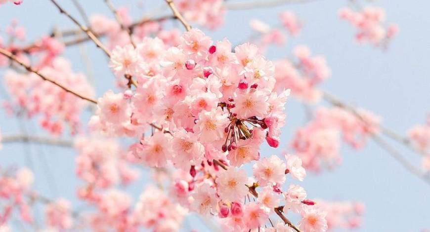 Il magnesio: un fido alleato contro i disturbi tipici della primavera