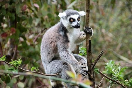 Reisverslag Madagaskar