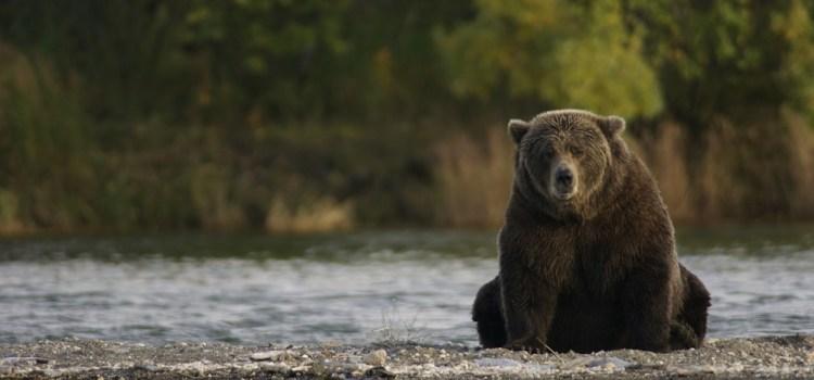 alaska beer Natuurlijk Linda
