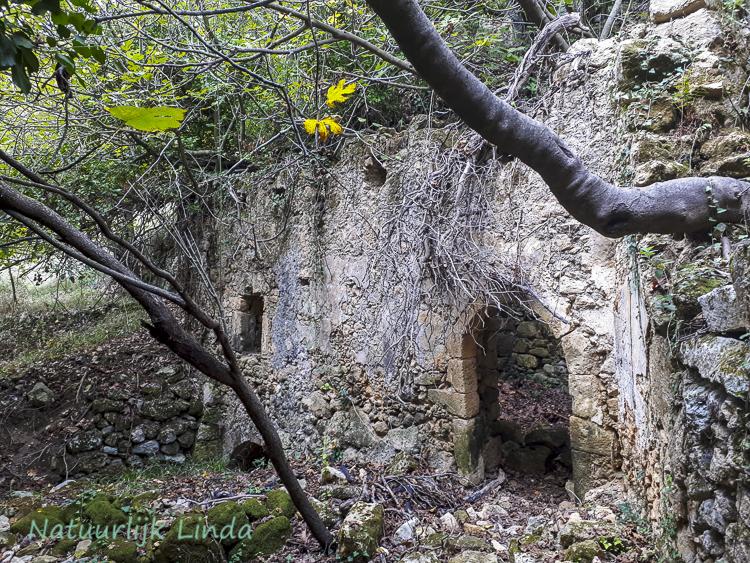 Mili kloof Kreta