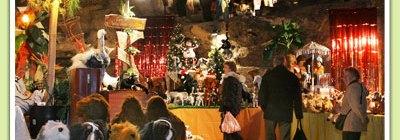 Kaasdrummen op kerstmarkt Woerden