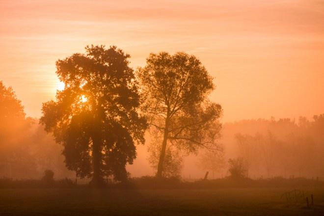 Herfstmorgen