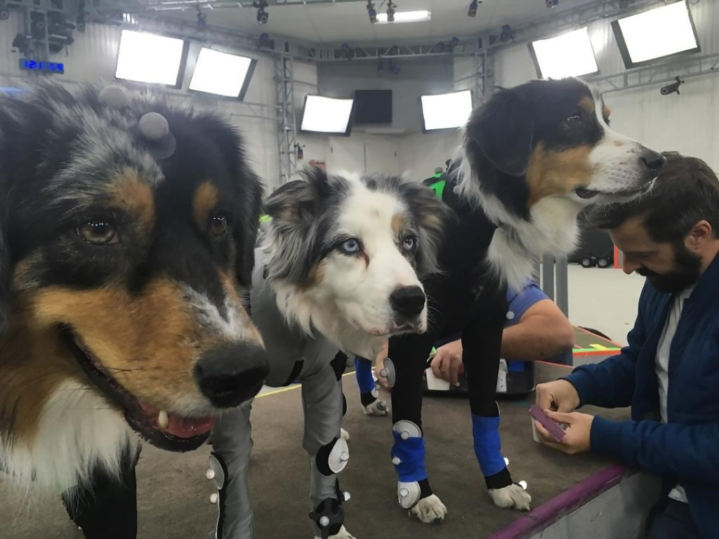 The Last Of Us Part II Motion Capture Chiens