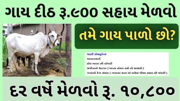 [ikhedut.gujarat.gov.in] Cow Sahay Per Month RS 900 (Cow Assistance Scheme Gujarat 2021