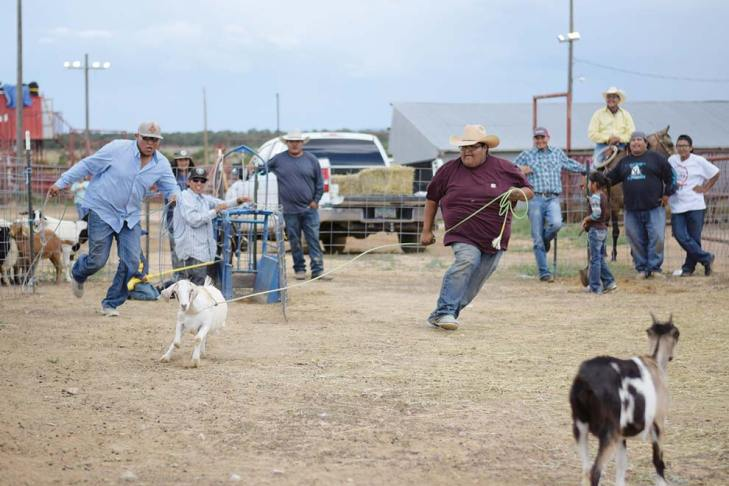 Navajo Times | Ravonelle Yazzie Jebby Martin and Yazhi Thomas team up in the goat-tying event held at Ramah Navajo Fair and Rodeo on Aug. 24.