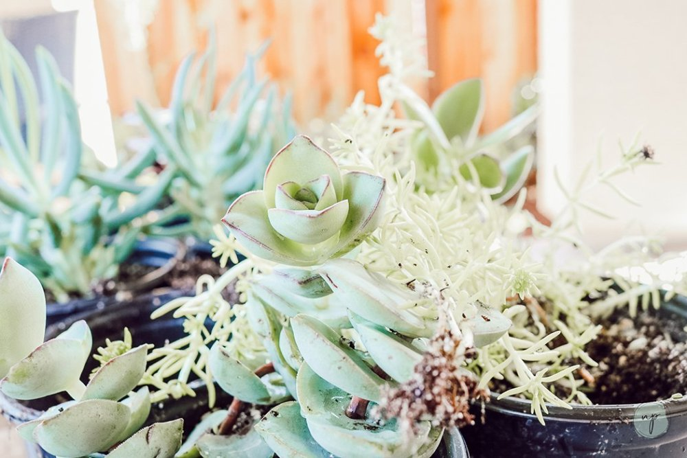 great indoor plants- succulents