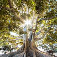 The Root of a Rich Relationship with God The Navigators