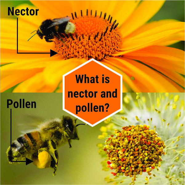 What is nectar and pollen?