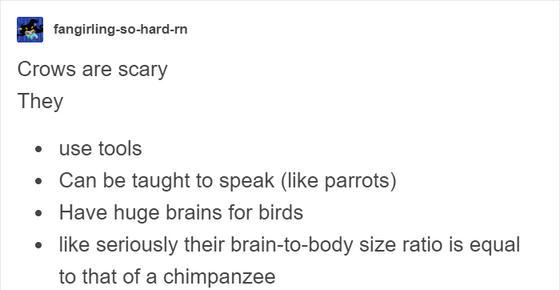 Вот реальные истории, которые доказывают: вороны - самые умные существа на Земле! Они умнее некоторых людей.