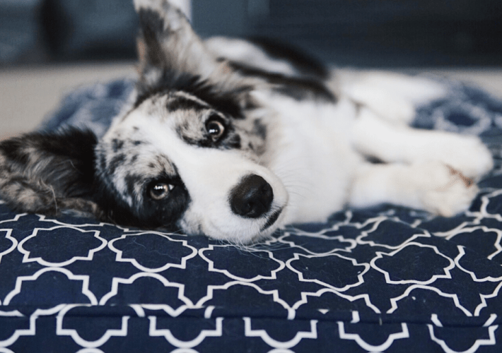 Help! My Dog Has Separation Anxiety | Our Experience with