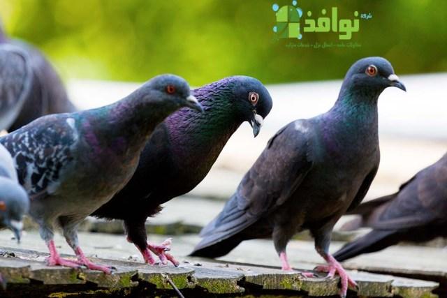 شركة مكافحة الحمام والطيور بحائل