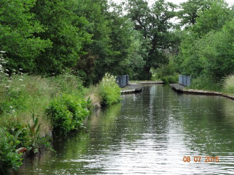 Another view of the overgrown canal bank