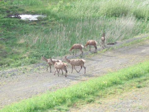 A small group of deer on our early morning walk.