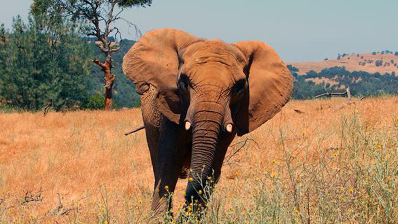 elephantweb_200381