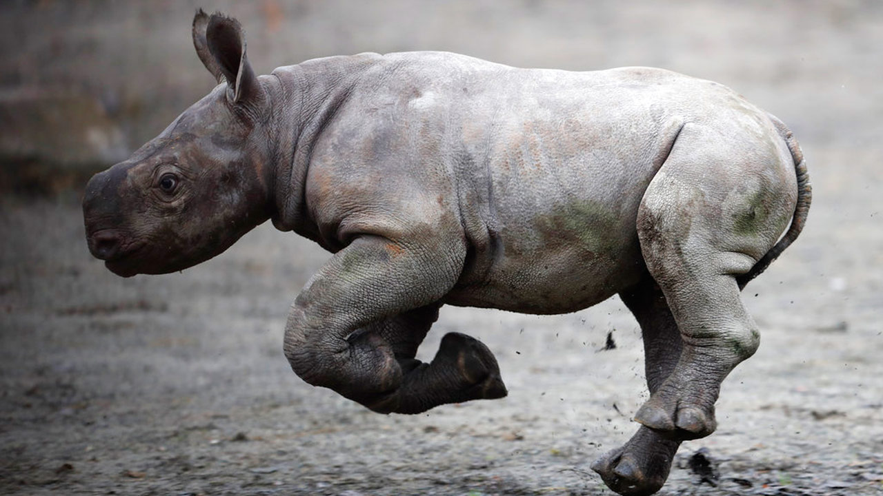 baby-black-rhino_361173
