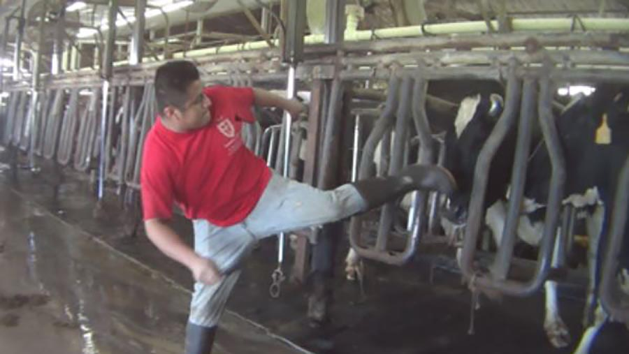 r-arm-dairy-farm-abuse-clai_364374