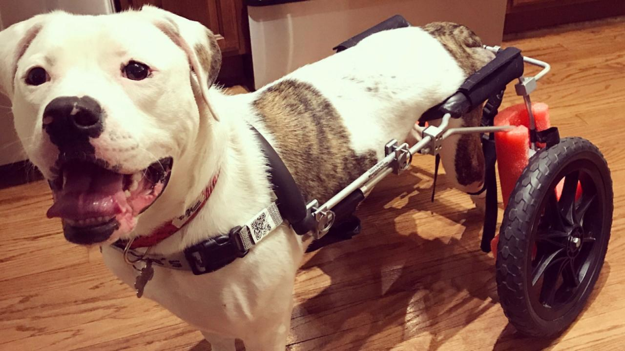 032518_wheelchair_puppy_web_404607