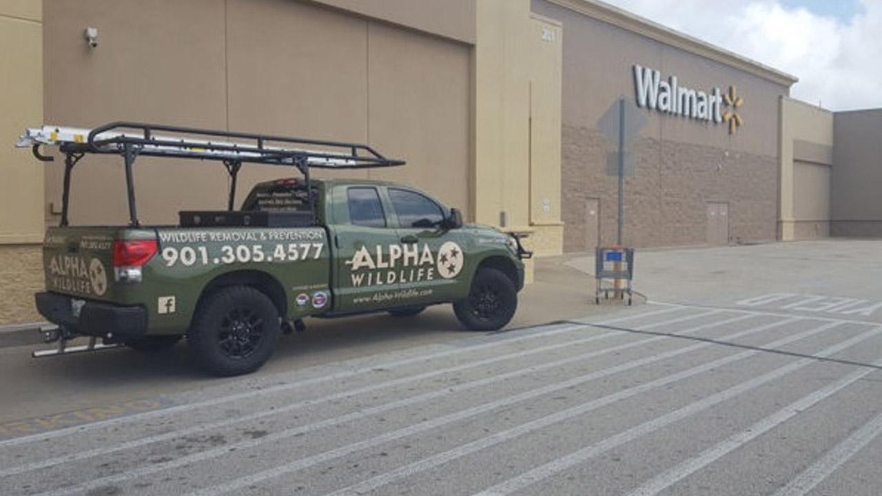 Racoons Walmart 3_1531763652387.PNG_48763926_ver1.0_1280_720_1531766254654.jpg.jpg