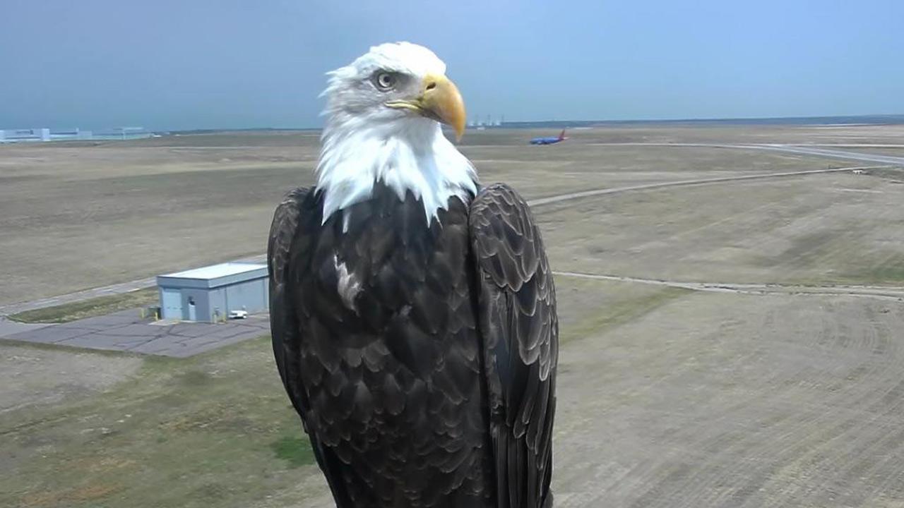 bald-eagle-selfie_1533216792397.jpg