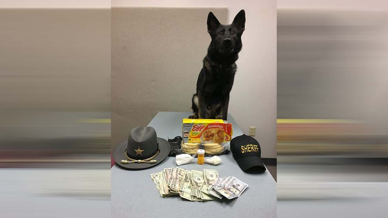 Deputy Dog and his Eggos_1539455792066.jpg.jpg