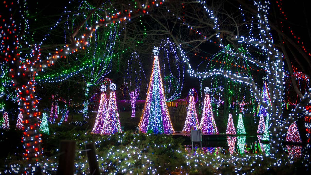 zoo lights_365967