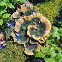 Turkey Tail mushrooms deep dream