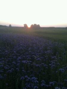 Sonnenuntergang kurz vor Stargard