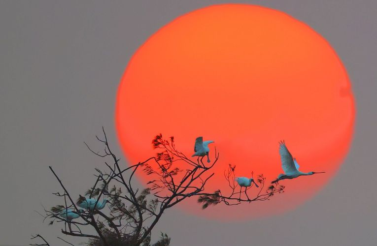 拍鳥俱樂部第六屆瞬影永恆聯展 展期接近尾聲