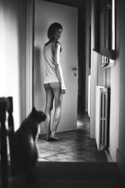 Cats and Pussies Davide Ambroggio 4