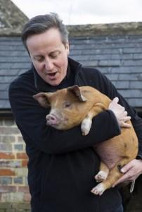 Britse rijken neuken dode varkens in hun mond