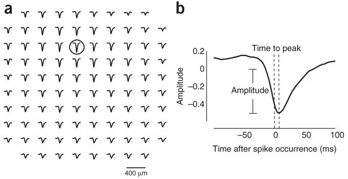 spikes trigger lfp waves  u2013 not so fast  u2013 xcorr  comp neuro