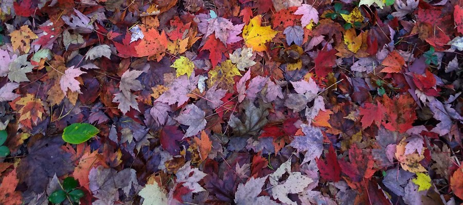 NCCA-Artsplace Fall Photo Competition: Deadline October 1