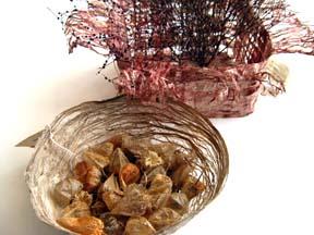 Sandy Timmer bowls 5web