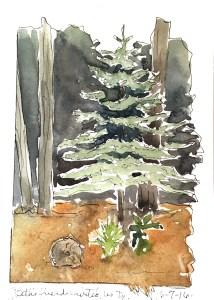 6 7 tree