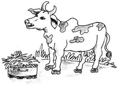 Cow Essay