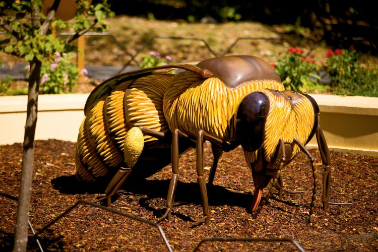 Honey Bee Garden Is Buzzing At The North Carolina Zoo