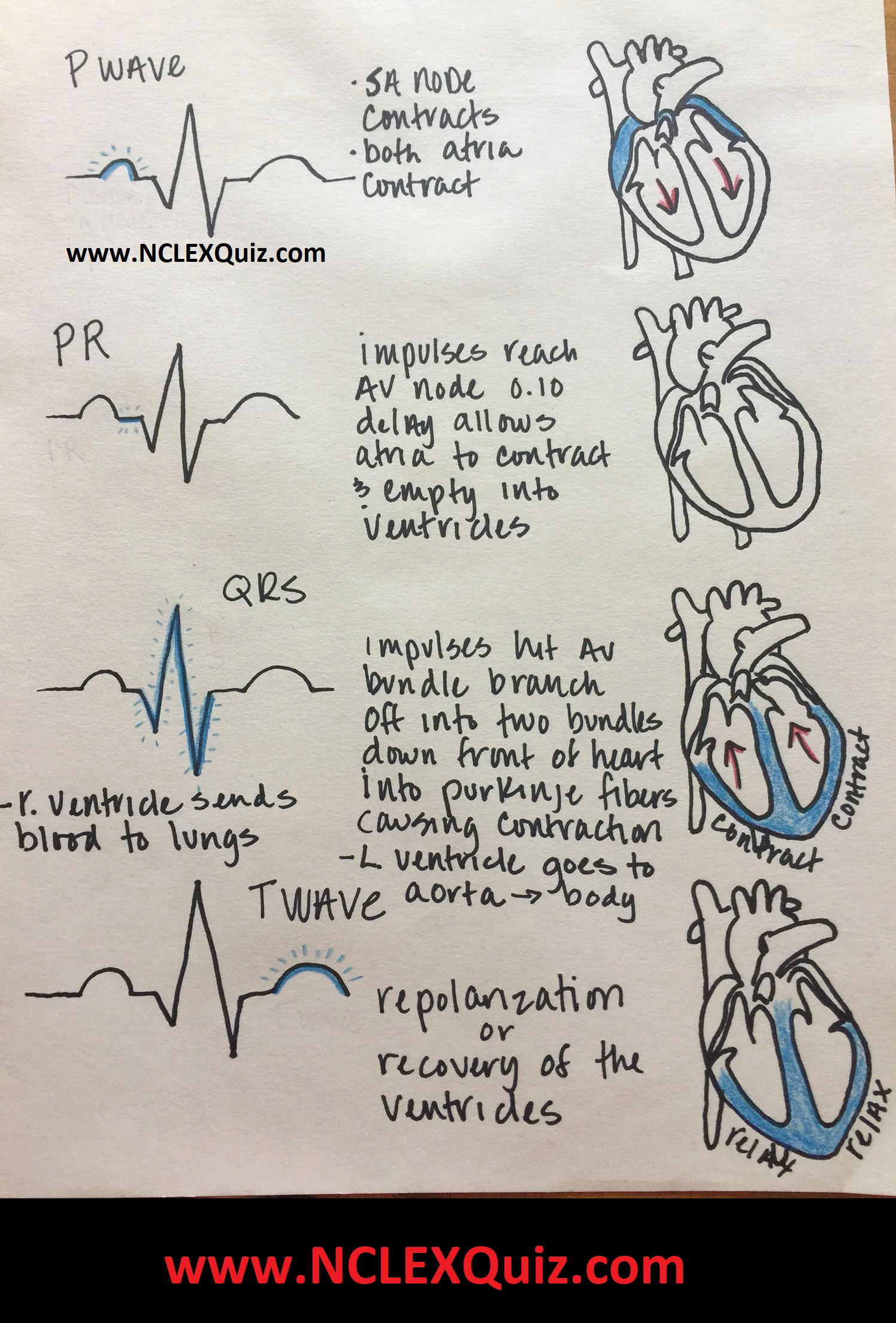 Cardiac Cycle Phases Of Cardiac Cycle Cardiac Cycle