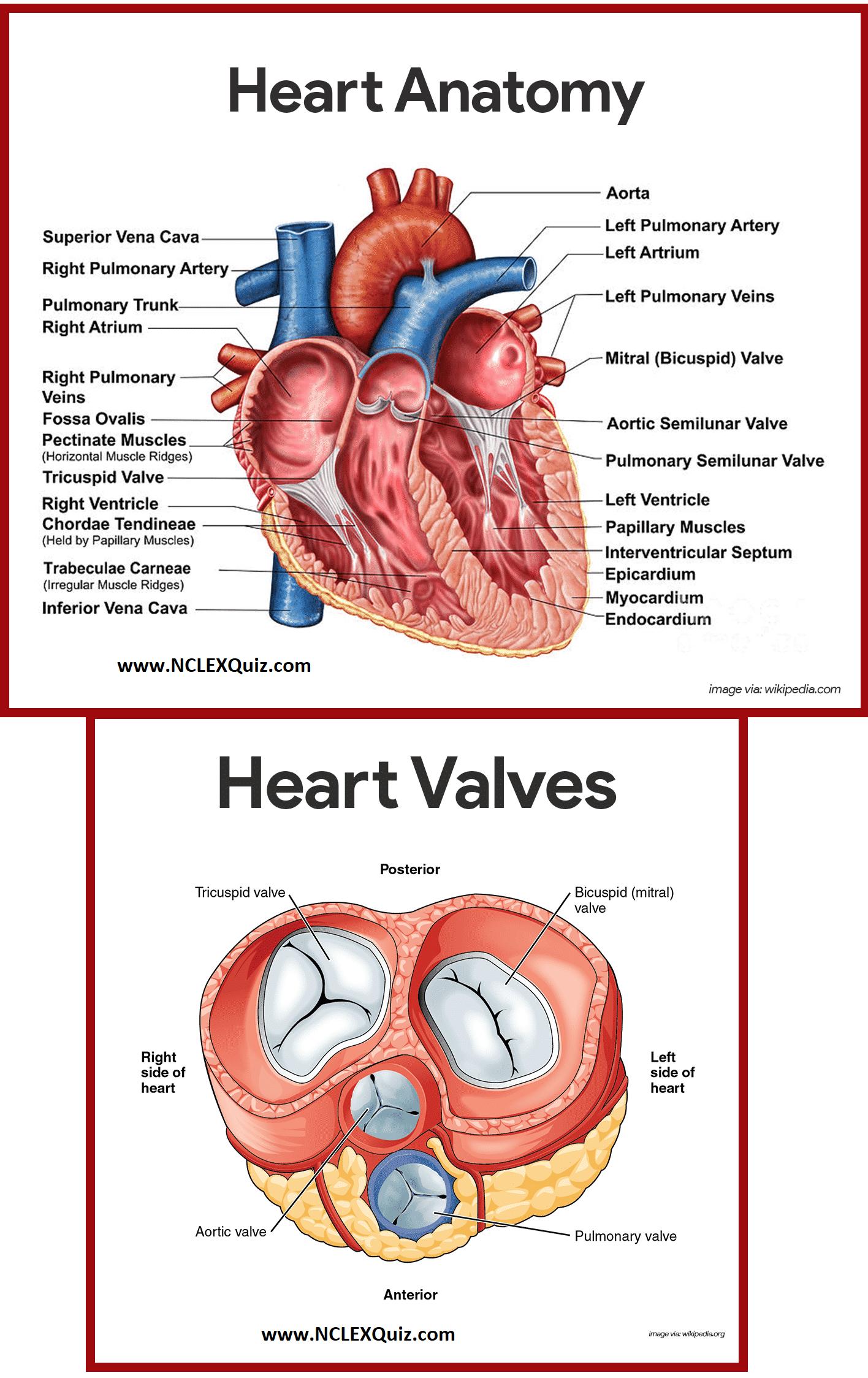 Diagram Of Heart Blood Flow For Cardiac Nursing Students