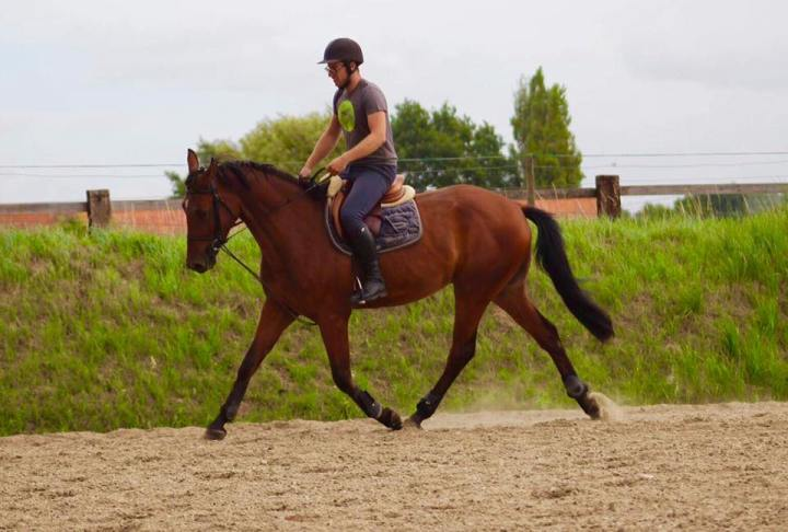 Jonge paarden