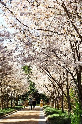 Botanical Garden Near Me