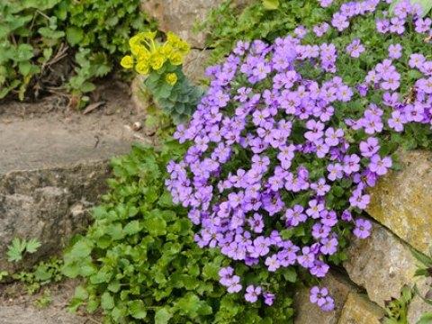 pflanzen für steingarten einen steingarten anlegen und bepflanzen   ndr.de - ratgeber