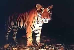 Supreme Court likely to decide today on whether to allow tourism in core areas of tiger reserves