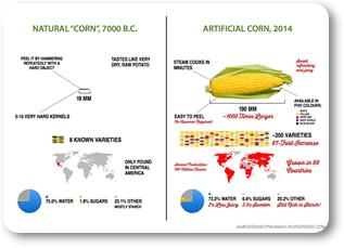 corn evolution 317x229