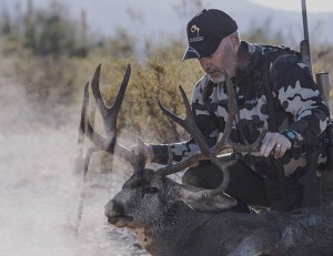 Mule Deer - Mexico