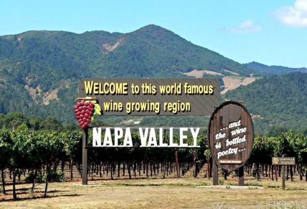 Snobs: photo of a vineyard in Napa Valley.