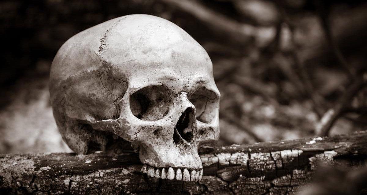 Joke Beethoven skull