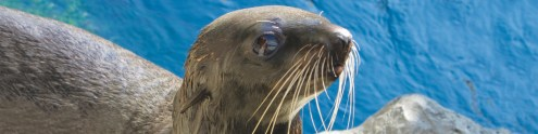 FAQs   New England Aquarium Frequently Asked